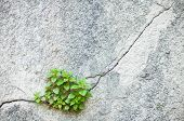 Plant Growing Out Of An Old Wall