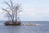 Pelican Peninsula