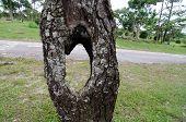 Hole On Tree.