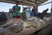 KOTA KINABALU, MALAYSIA - MAY 17 2014: Sharks at fish market. Environmental problem of trade in enda
