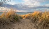 foto of sea oats  - Sandy path winds among the sand dunes and sea oats to a freshwater beach - JPG