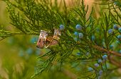 Wedding rings hanging on the tree