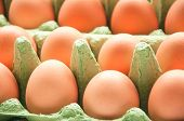 Eggs In Green Cartone