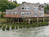 Abandoned Algae Covered Pier Logs With A Building On Stilts
