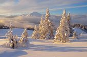 Fabulous Christmas landscape. Fir trees under the snow. Beautiful winter mountains