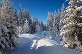 Trail in the snow. Winter forest with snowdrifts. Christmas landscape in the mountains