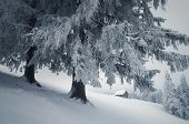 Fabulous landscape with wooden house. Winter in the mountain village. Carpathians, Ukraine