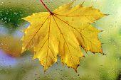 Autumn leaf on window glass close-up