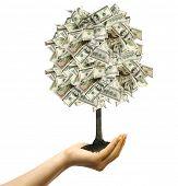 Money tree in female hand on white background