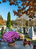 pic of tribute  - Rows of graves decorated with floral tributes at the catholic cemetery - JPG