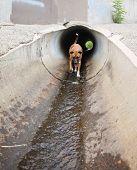 a cute dog at a local public park running through a tunnel