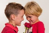a boy gives a girl a red rose