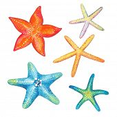 stock photo of aquatic animal  - Collection of starfish watercolor - JPG