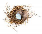 stock photo of bird egg  - Easter egg in birds nest isolated on white background - JPG