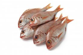 stock photo of red snapper  -  Fresh small raw red snappers on white background - JPG