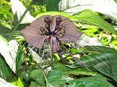 Flor de palo