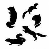 foto of chipmunks  - Chipmunk icons and silhouettes - JPG