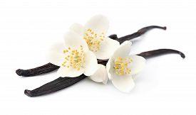 image of vanilla  - Vanilla sticks with flowers on white backgrounds - JPG