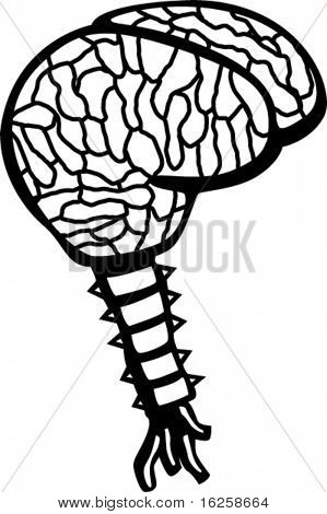 human brain with spinal column