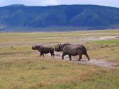 Rhinocero mãe e seu bebê na savana africana selvagem, Parque de Ngorongoro, Tanzânia