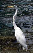 Tall Bird