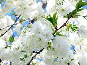 White Tree Close