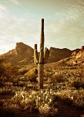 Wild west desert trail to Superstition Mountain with Saguaro cactus tree. Image has been color toned