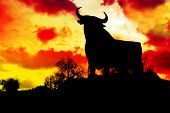 spain,silhouette of a bull in the field in Spain
