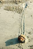 Snail Slow Pace On Sand