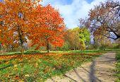 Autumn at the park in Vitebsk