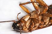 stock photo of pest control  - dead cockroach - JPG