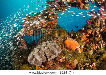 poster of Vibrant Coral Reef With Hundreds Of Glass Fish At The Ss Yongala Ship Wreck, Great Barrier Reef, Aus