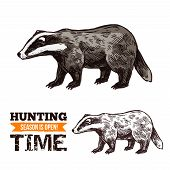 Badger Animal Sketch, Hunting Open Season Or Hunter Society And Hunt Club Theme. Vector Isolated Wil poster