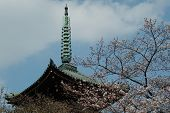 Cherry blossom and the top of pagoda in Ueno Park, Tokyo