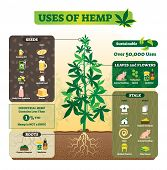 Uses Of Hemp Vector Illustration. Seeds, Leaf, Flower, Root And Stalk Use For Cooking Oil, Butter, F poster