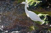 Wildlife refuge birds on an island nature perserve in florida