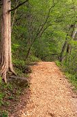 Pebble Trail In Green Forest Along Side Water Hiking Trail In The Woods And Park poster