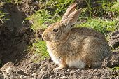 primer plano de un conejo conejo sentado, observan y esperan al lado de la entrada de warren
