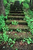 stock photo of winnebago  - Old mossy stairs lead through a lush forest at Kilbuck Bluffs Forest Preserve in Illinois - JPG