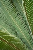 Diagonal fern