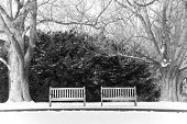 Pair of benches in the snow