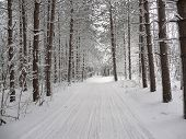 Trail Through Winter Wonderland