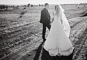 The Bride And Groom Go Through The Field Hand In Hand. Happy Bride And Groom Holding Hands And Walki poster