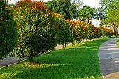 Linha da árvore e do caminho a pé nos parques