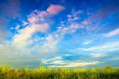 The Clear Sky, The Blue Sky, The White Clouds, And The Exuberant Grasses Show The Vitality Of Happin poster