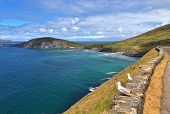 Beautiful Coast Between Slea Head And Dunmore Head At Slea Head Drive, One Of Irelands Most Scenic R poster
