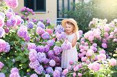 Little Girl Isin Bushes Of Hydrangea Flowers In Sunset Garden. Flowers Are Pink, Blue, Lilac And Blo poster