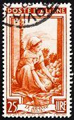 Postage stamp Italy 1950 Sorting Oranges, Sicilia