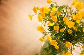 Yellow Buttercup Flowers, With Room For Text