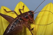 Grasshopper Close-Up